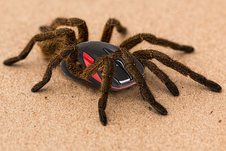 "alt=""tarantula with computer mouse body"""
