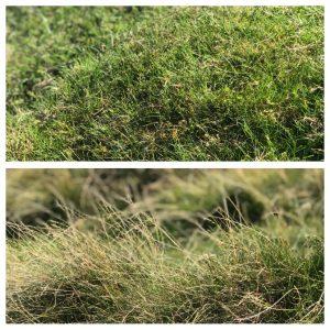 """alt=""""Yorkshire Grass Collage"""""""